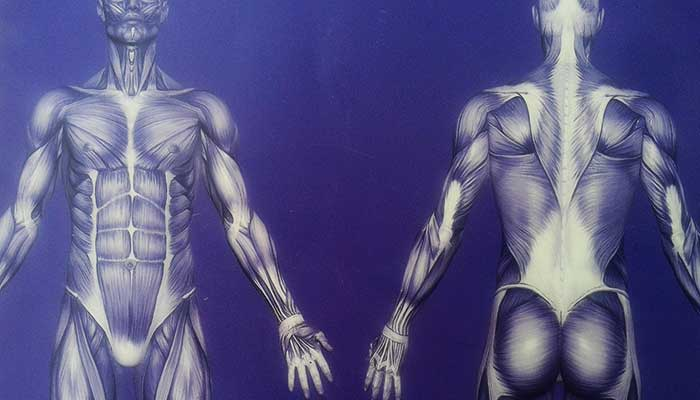 Yoga Professionals Anatomy and physiology