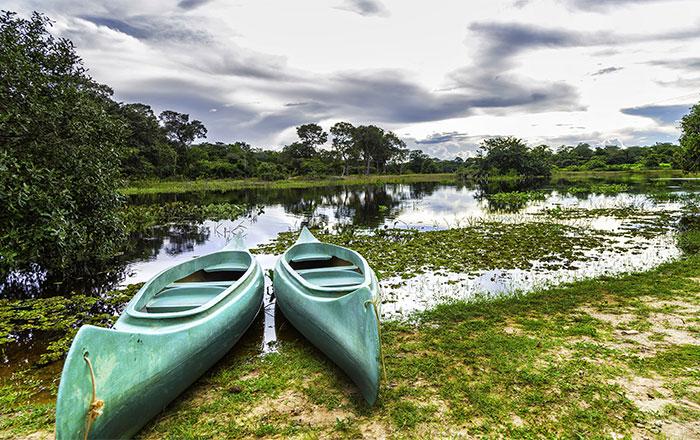 Brazil-Pantanal